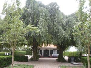 Westzaan begraafplaats (81)