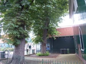 Bomen Krommenie en Wormerveer (77)