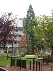 Bomen Krommenie en Wormerveer (223)
