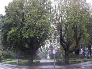 Verzetsplansoen paardenkastanjebomen 2015 (10)
