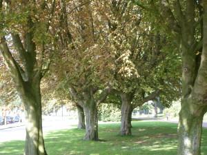 Bomen veldpark en heemtuin okt 2015 047-2