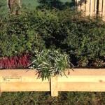cornelis vet planten