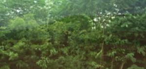 oerwoud