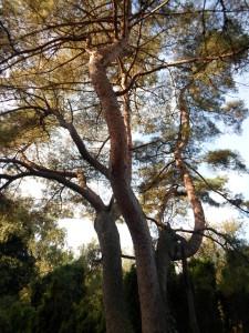 Bomen veldpark en heemtuin okt 2015 078