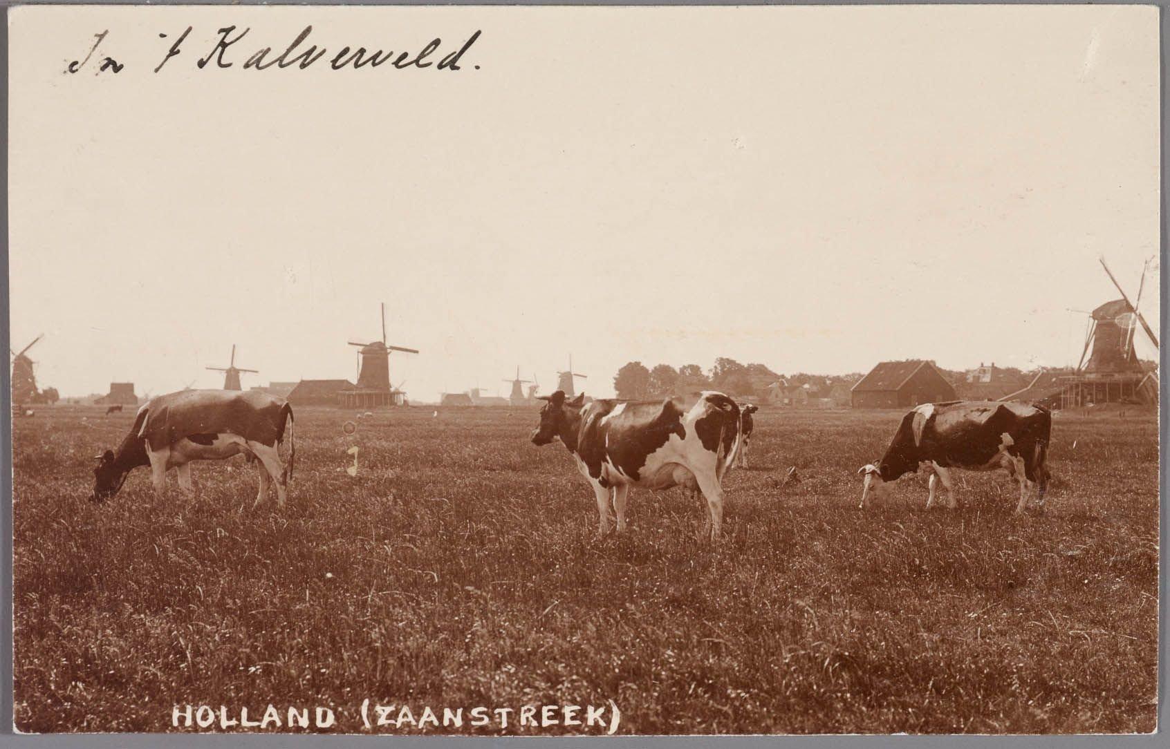 Kalverpolder omstreeks 1900 4105600