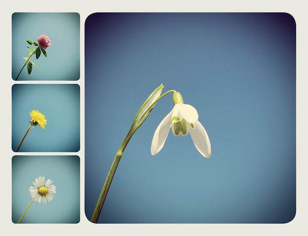 bloempje van links expo.indd