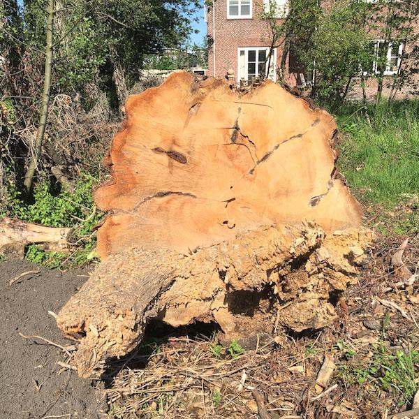 boom prov weg 2