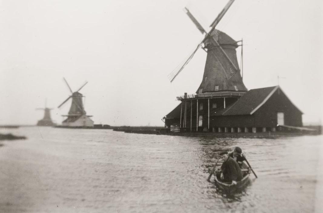 Elzenboom 1895