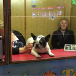 kermis hond