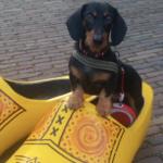 hond-in-klomp-zaanse-schans