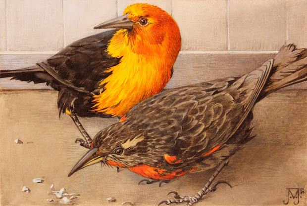 jan-voerman-jr-oranjeborst-en-grondtroepiaal-dierenleven-in-artis-1939-verkleind