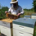 westzaan bijen