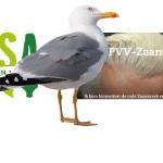 ROSA PVV