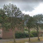 bomen bolksbeek
