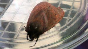 bijzonder insect