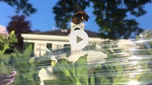 slider bijen krommenie