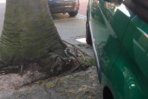 boom zuiderhoofdstraat 50woordenfoto