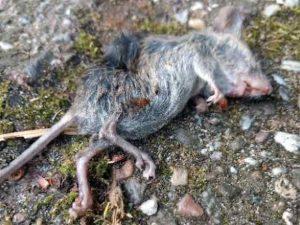 dode-muis-slider-huisbioloog