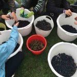 druivenpluk amsterdam