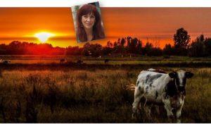 ruth slider koe