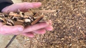 hout biomassa