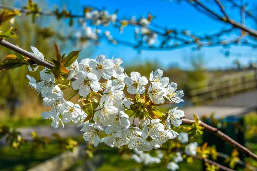 Lente 1 april