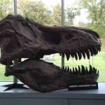 Schedel T-Rex copy