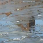 water februari 2020