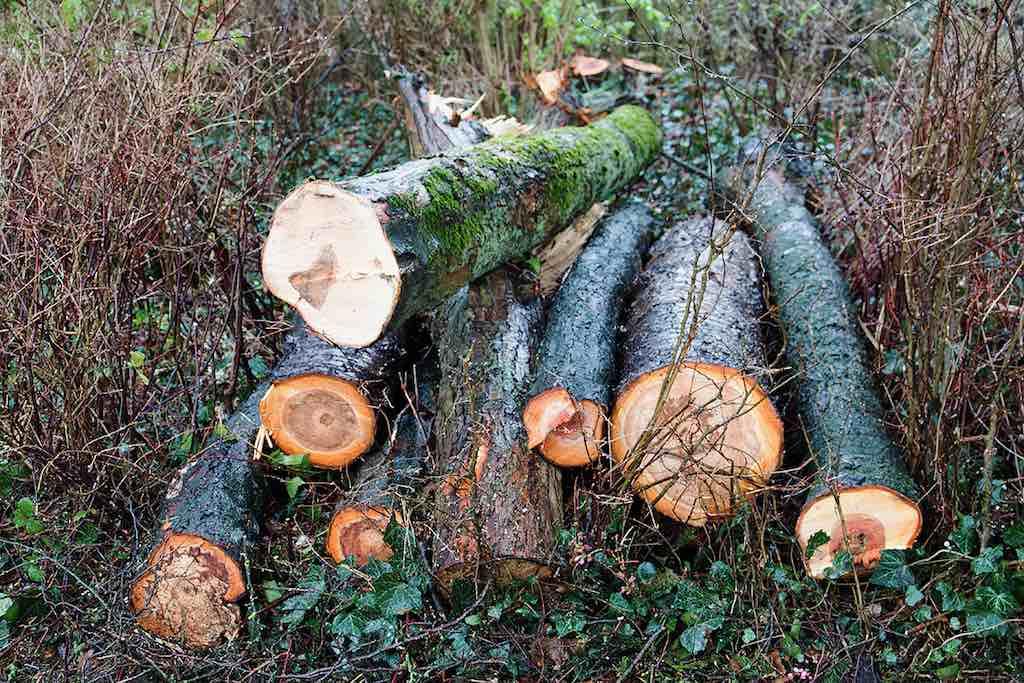 Bomenkap_He t_Kalf_©_Willem_Croese 2
