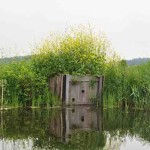 IJsvogelwandje Twiske foto Guda Floris copy