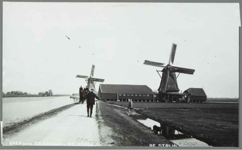 Molen de Dood aan de Braakdijk te Zaandam, daarachter molen de Strijd