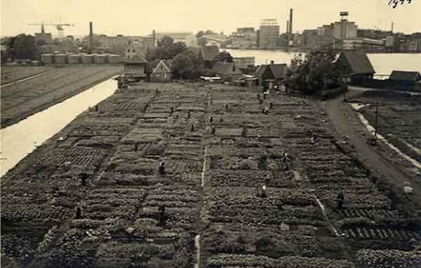 De moestuinen voor de fabriek waarin groente werd gekweekt tijdens de oorlog voor het personeel
