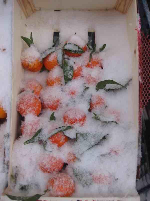 eelco aartsen sneeuw markt mandarijnen