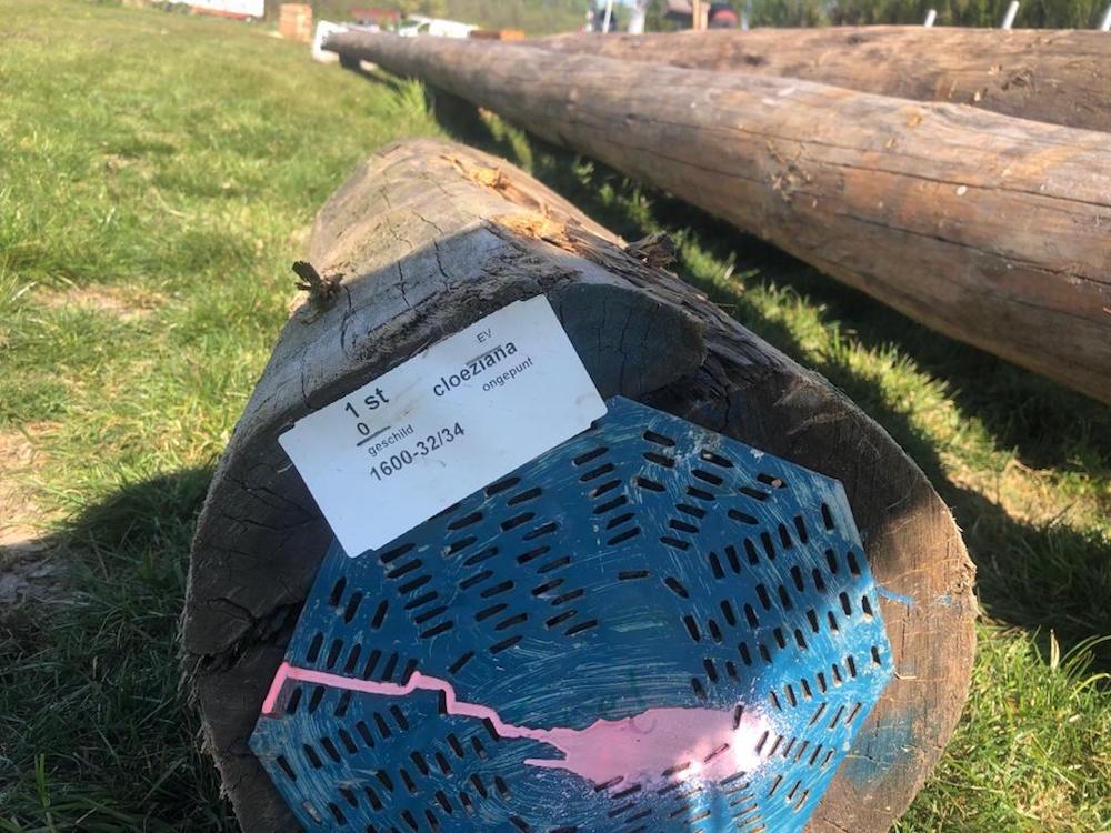 klimpark twiske cloeziana hout