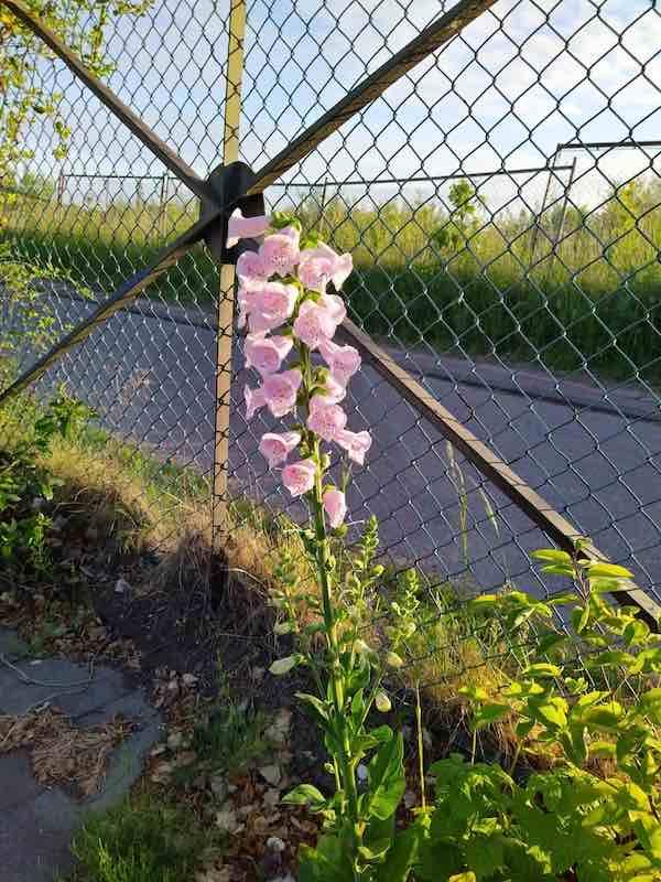 scouting bloem
