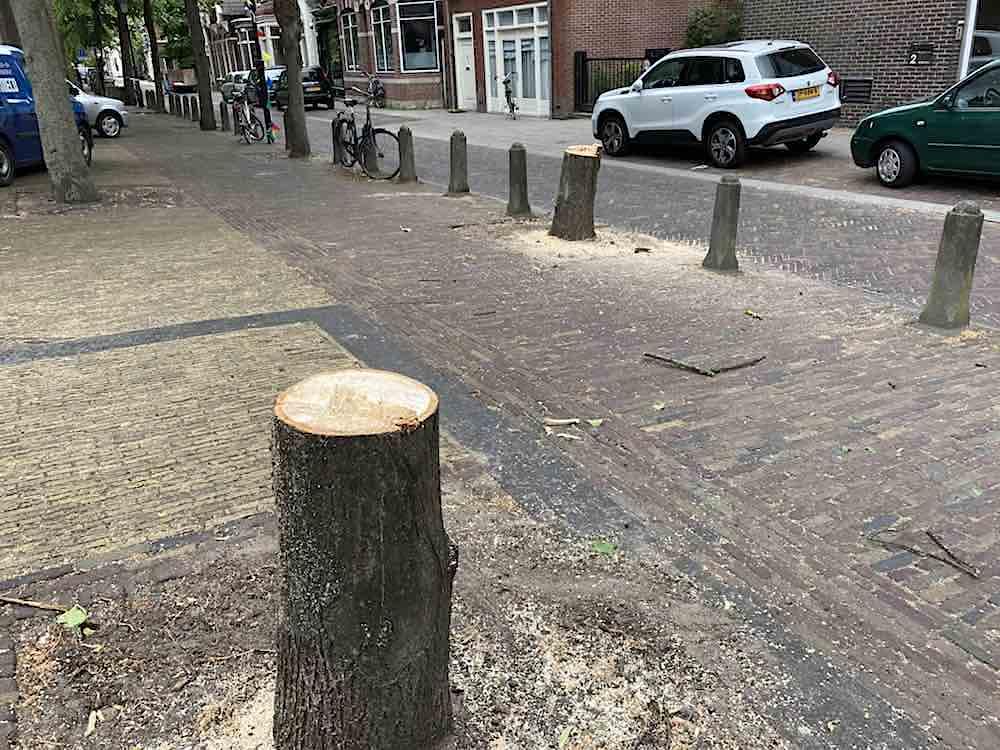 gekapte bomen bullekerk juni 2020 orkaan
